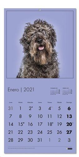 CALENDARIO PARED 2021 MIQUELRIUS 30X30 PERROS REF 28084
